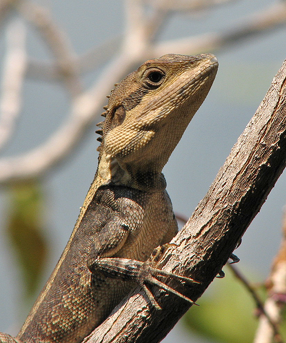Australia 2006 Mammals And Reptiles