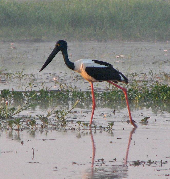 austeria natinol birds